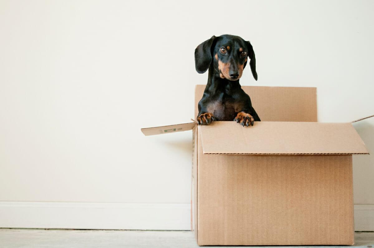 Should I Move Back Home? An (Honest) Guide via @allamericanatlas